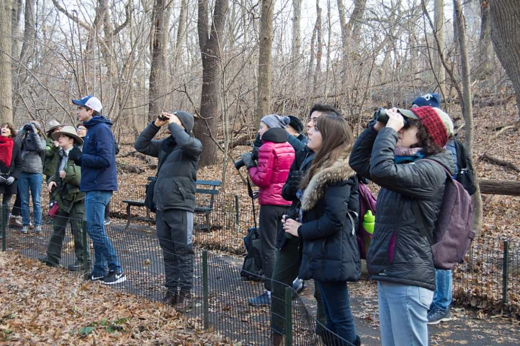 Birders of all ages and skill levels were invited to participate in the Audubon Christmas Bird Count. We had 109 Community Science volunteers count birds with us this year in Central Park. Photo © NYC Audubon